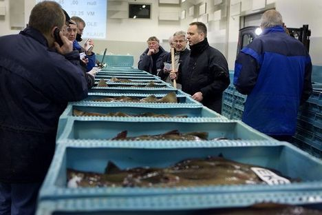 hirtshals fisk aalborg