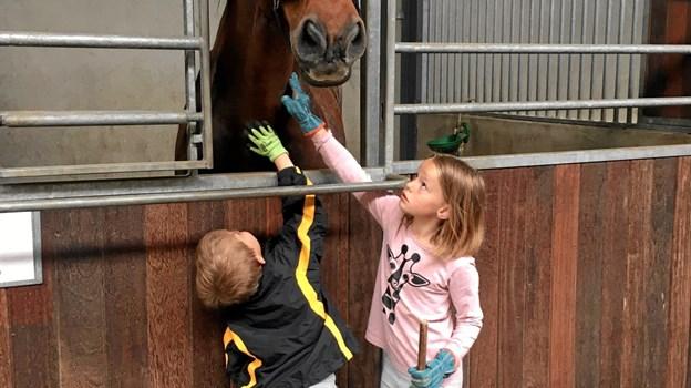 Vikarbureauet fra Ørebroby var blandt andet hos Vesterstrand Ridecenter for at løse praktiske opgaver omkring de opstaldede heste. Foto: Ørebroskolen