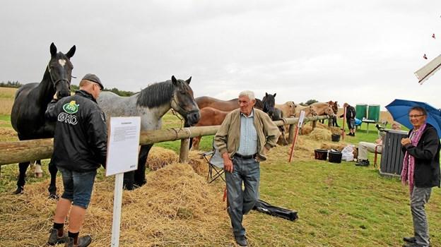 Der var syv forskellige hesteracer repræsenteret på hestedagen. Fra de store racer som jysk hest til nordbagger og ponyer. Foto: Jørgen Ingvardsen Jørgen Ingvardsen