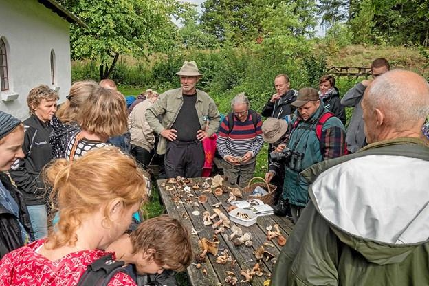 Naturvejleder Jakob Kofoed gennemgår de fundne svampe og fortæller om de er spiselige eller ej. Foto: Niels Helver