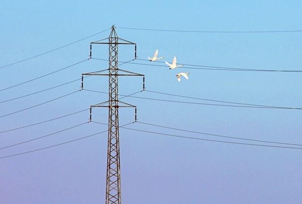 El-masterne fjernes til gavn for fuglelivet.Foto: Niels Dahlin Lisborg