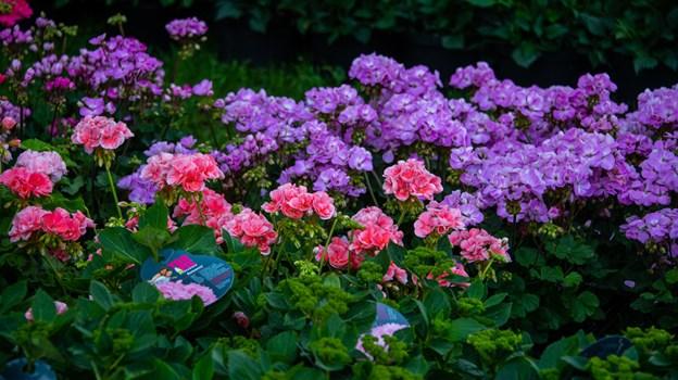 Det er 24. gang der inviteres til Blomsterfestival. Foto: Kim Dahl Hansen Foto: Kim Dahl Hansen