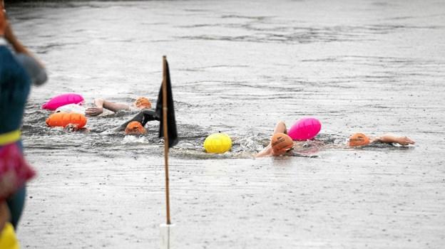 Godt 20 svømmere var i vandet. Foto: Allan Mortensen