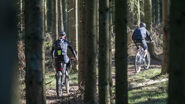 Skoven på Nejst er klar til at modtage MTB ryttere. Arkivfoto: Nicolas Cho Meier