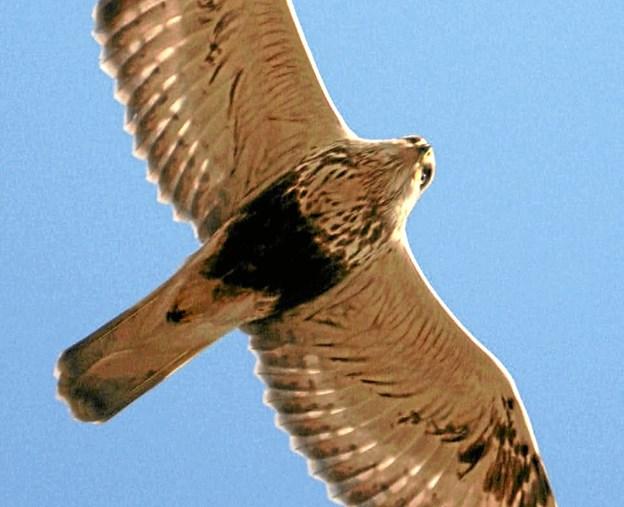AOF-Vendsyssel tilbyder i sit nye forårsprogram bl.a. guidede fugleture.Foto: Privatfoto
