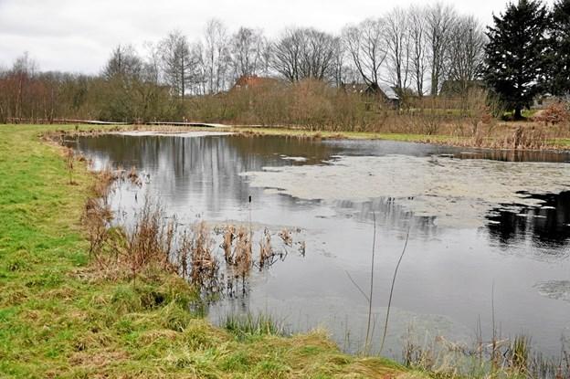 Den lille sø giver området et godt præg af natur. Man kan dog ønske, at der kommer nogle åkander længere henad året. Foto: Ole Torp Ole Torp