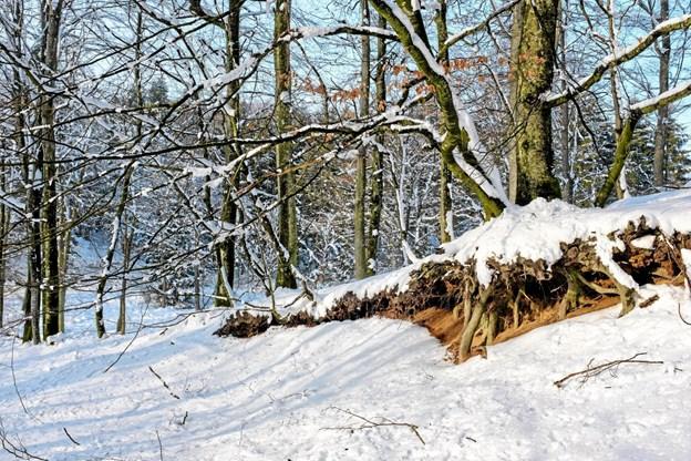 Vintersolen får sneen til at lyse endnu mere op, og mange detaljer kommer til syne. Foto: Niels Helver Niels Helver