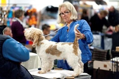 Hundene kom fra hundeklubber fra hele landet. Mange havde kombineret besøget med hundeudstilling i Hobro om søndagen.