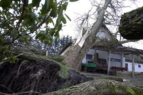 Forsikrings-præmier ramt af milde vinde