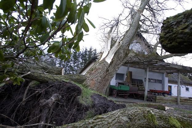 Store storme var Vendsyssel forskånet for i 2018. Det er blandt årsagerne til, at GF Forsikrings lokale kunder nu får del i et millionstort overskud. Foto: Bente Poder