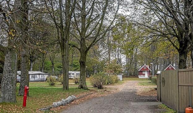 Bladene er faldet af træerne, så tydelig at vintersæsonen nu er i gang. Foto: Mogens Lynge