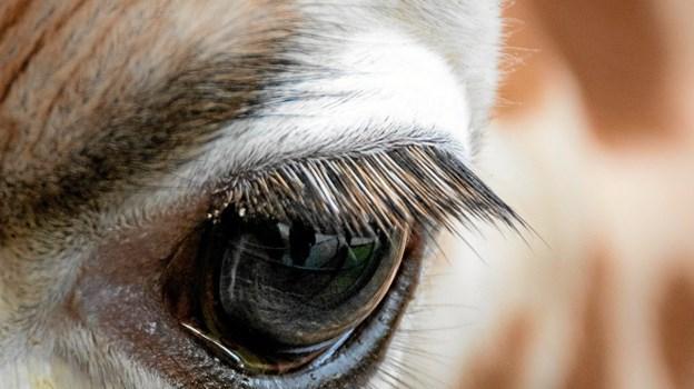 Øjenkontakt. Foto: Randi Møgelmose
