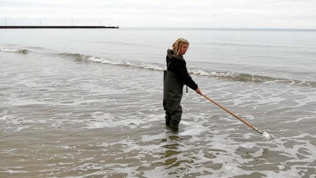Miljøtekniker Nancy Nielsen iklædt vaders tager en vandprøve samt måler badevandstemperaturen. Denne dag lige før jul var temperaturen 5,3 grader. Foto: Kirsten Olsen