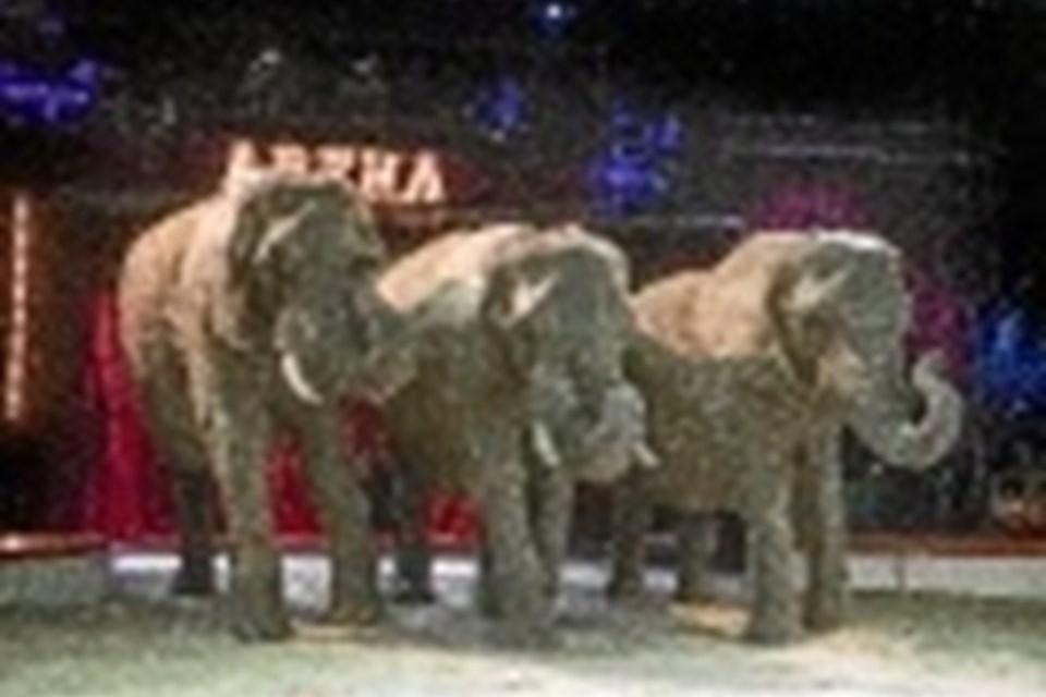 Endnu må der vises elefanter i cirkus - og således også i Arena. Privatfoto