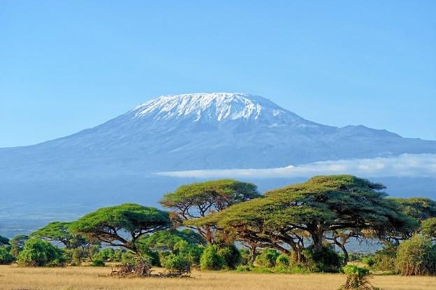 Snow on top of Mount Kilimanjaro in Amboseli. Arkivfoto