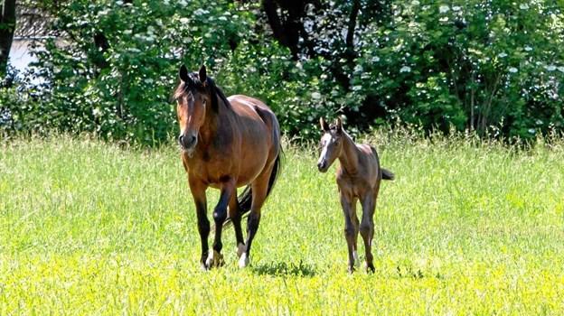 Mor og søn side by side. Foto: Nanna Højbjerg