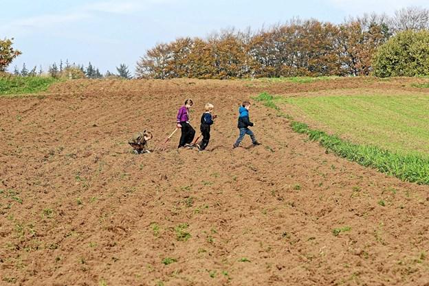 I løbet af få timer var det slut. Der var ikke flere kartofler. Alligevel gik børnene en sidste tur, for mon ikke der bare var en enkelt kartoffel tilbage! Foto: Niels Helver