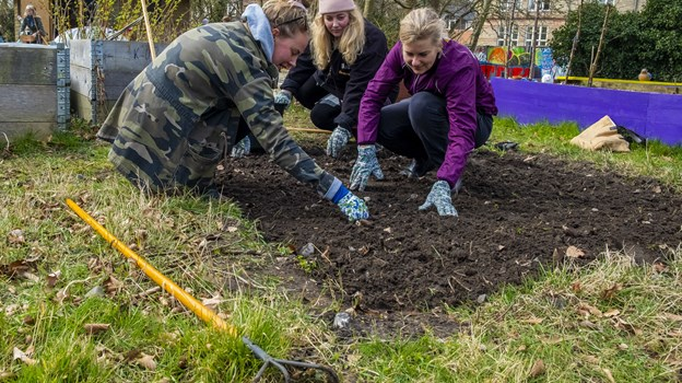 De små byhaver i Karolinelund er i høj kurs - men flere må gerne være med. Foto: Lasse Sand