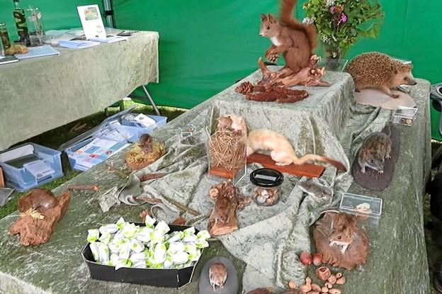 Dyr, der alle kan findes i Rold Skov. Foto: Privat