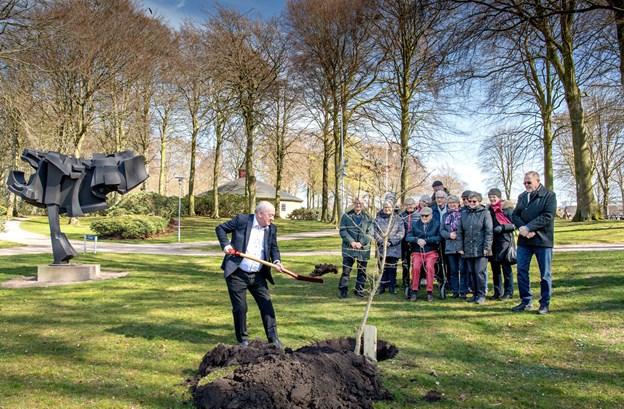 """Viceborgmester Karsten Frederiksen (K) fik æren af at plante vinteregen i Hedelund ved siden af skulpturen """"Stor Aggression"""" og kaste den første jord i hullet.Foto: Henrik Louis"""