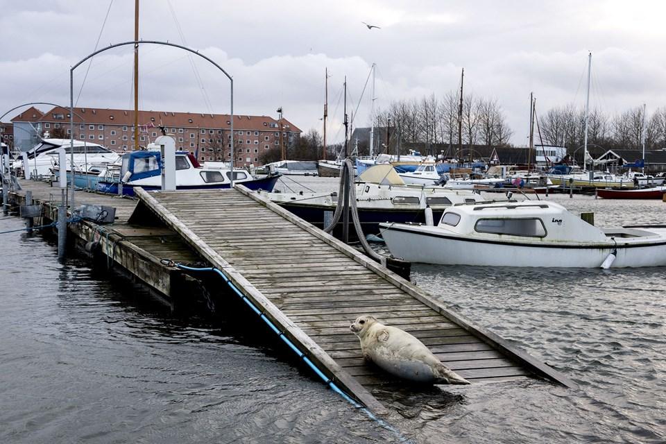 Dmi Søndag Aften Fortsat Høj Vandstand Nordjyskedk