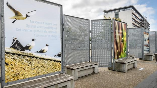 Borgerne valgte i forsommeren fem nye værker til Frederikshavns Poesipark. Det var en forløber for den model, man nu sætter i værk. De står alle i Lodsgade. Arkivfoto: Peter Broen