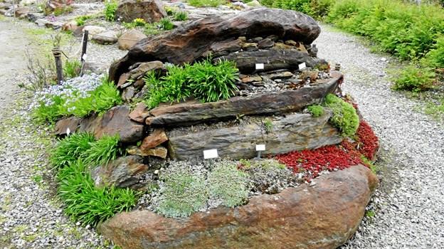 Tromsø Botaniske Have. Privatfoto