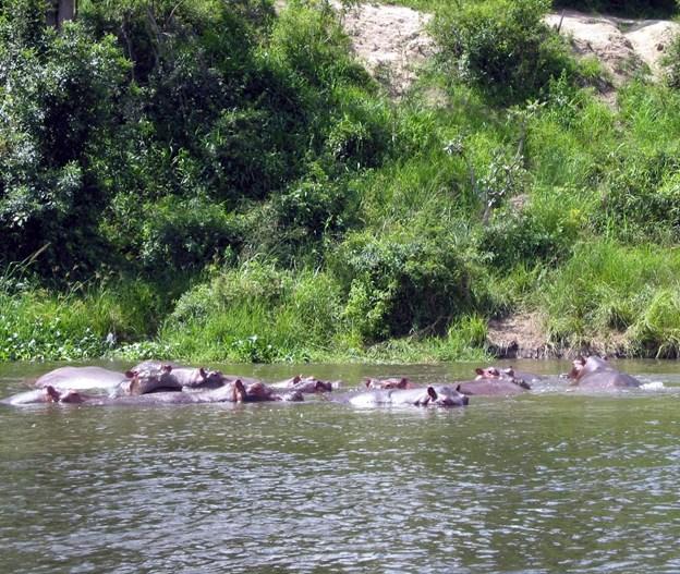 Turen går ned ad og langs verdens længste flod - Nilen.