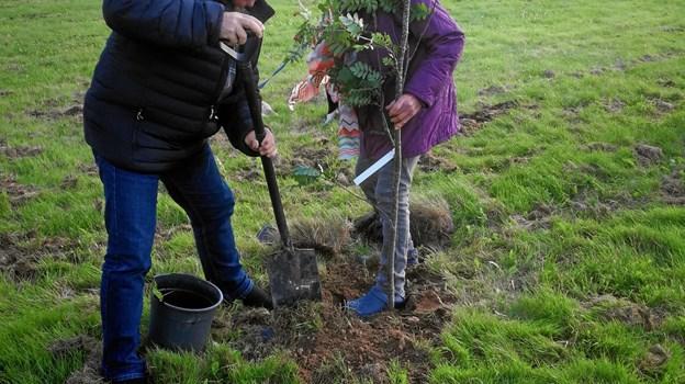 Et symbolsk træ blev plantet i den nye hundeskov i Præstbro. Privatfoto.