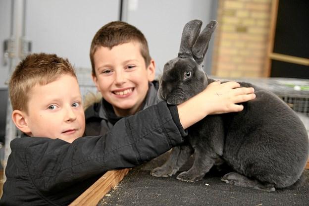 Igen i år var der inviteret en udstilling med kaniner. Foto: Flemming Dahl Jensen