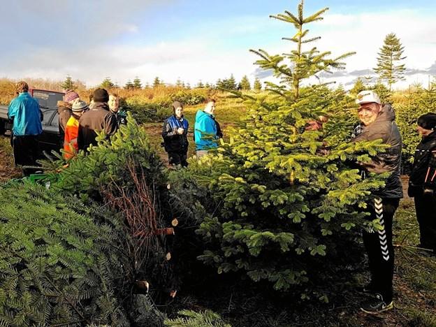 Fodboldspillerne udvælger med stort omhu de træer, der skal sælges til familierne i Svenstrup og Godthåb. Arkivfoto: Karl Erik Hansen