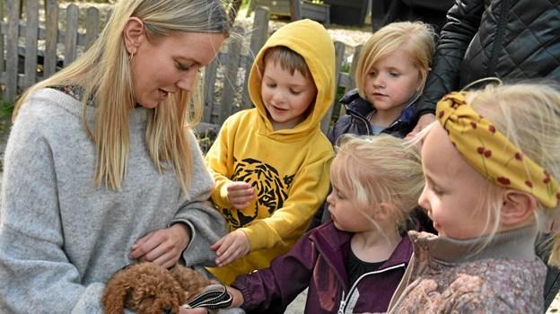 """Børnene var helt vilde, da de opdagede, at Line Sørensen havde en """"Vaffel Vovse"""" hund, som er kendt fra DR Ramasjang. Hunden er dog ikke fra TV serien, men en 9 ugers gammel Cavapoo med navnet Verner. Foto: Niels Helver Niels Helver"""