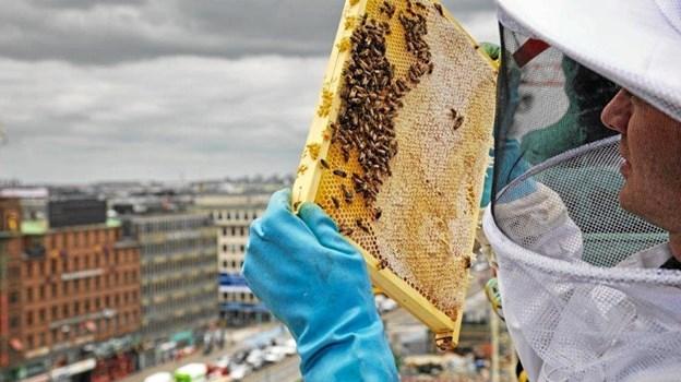 Oliver Maxwell er antropolog, stifter og direktør i den københavnske socialøkonomiske virksomhed Bybi. Han gæster Utzon Center 13. juni, hvor han fortæller om honning, bier, blomster og bestøvning som omdrejningspunkt for et rigere miljø. Foto: Bybi