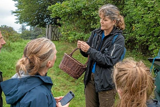 Naturvejleder Karin Krogstrup fra Hjørring kommune guider deltagerne på en blomstertur, hvor hun fortæller om de mange spændende planter, her en kællingetand. Foto: Niels Helver