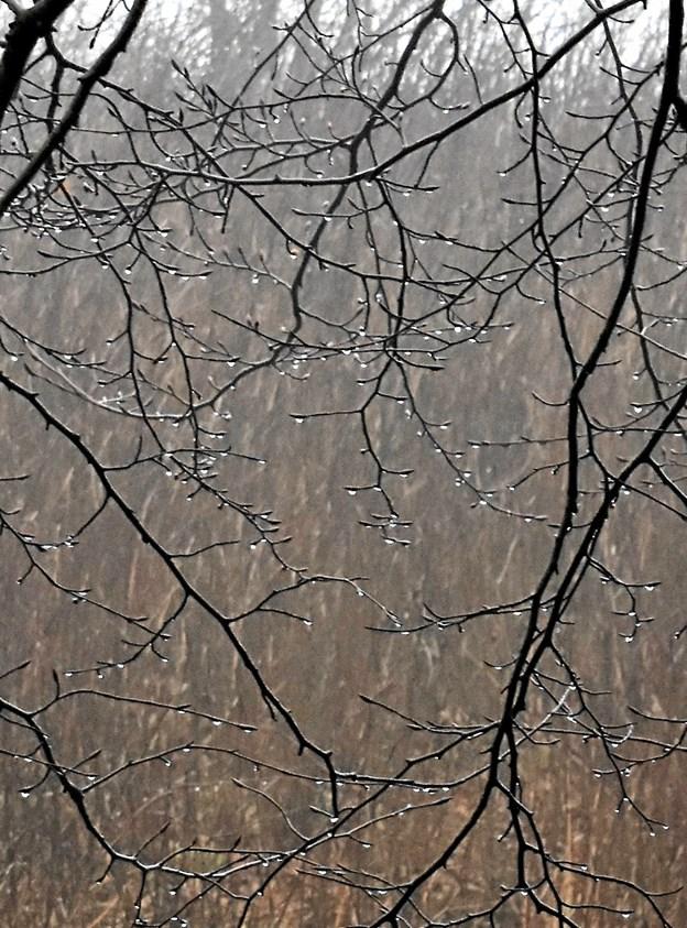 Tågen hang som vanddråber i træerne. Privatfoto