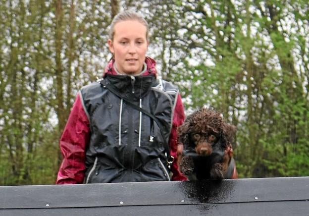 Hunde og hundeejere trodsede regnen. Foto: Privat