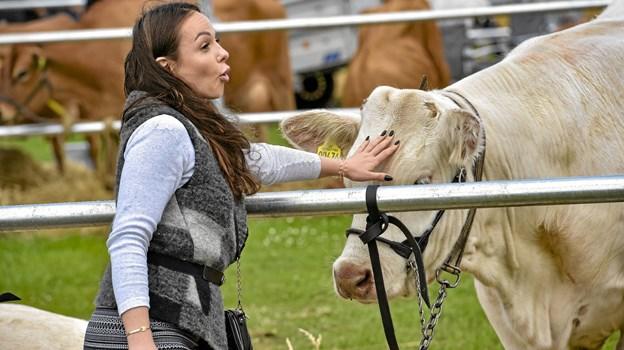 Men så kom solen og alle kunne komme til at nusse en ko i panden - hvis man havde lyst til det. Foto: Ole Iversen Ole Iversen