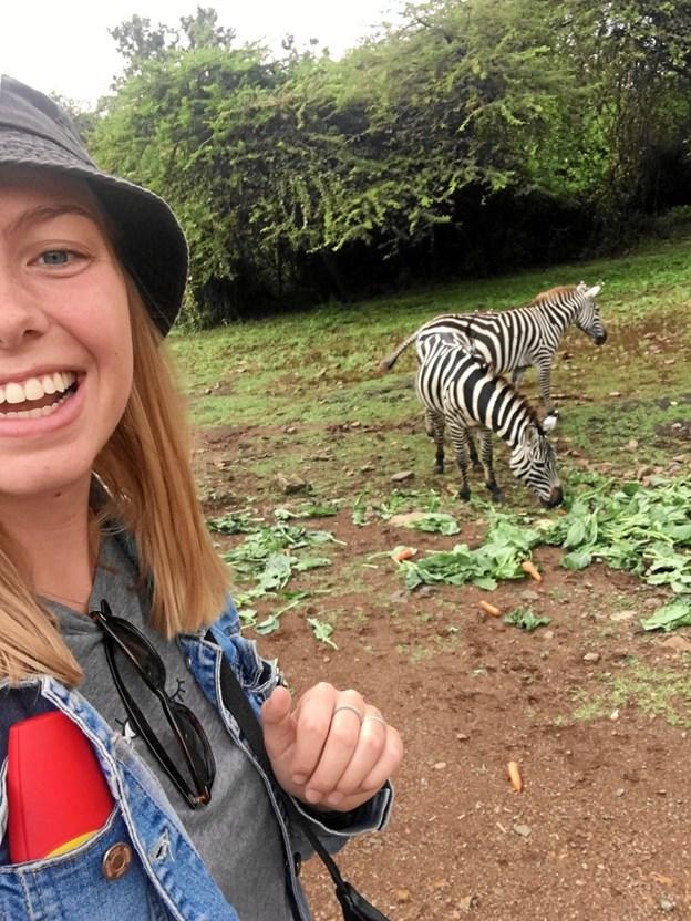 Dyre-selfie med to kælne zebraer. Privatfoto.