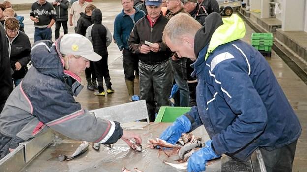 Ander Wolff og formand for for Skagen Havfiskeklub Mette Stenbroen, havde travlt ved indvejningen i auktionshallen. Foto: Peter Jørgensen Peter Jørgensen