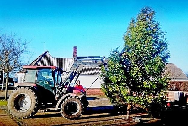 """Byens juletræ er ved at blive """"plantet"""" på Torvet i Rakkeby. Foto: Helge Jensen $ID/NormalParagraphStyle:"""