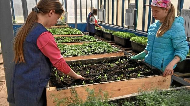 Undervisning i det nyrenoverede drivhus. Privatfoto
