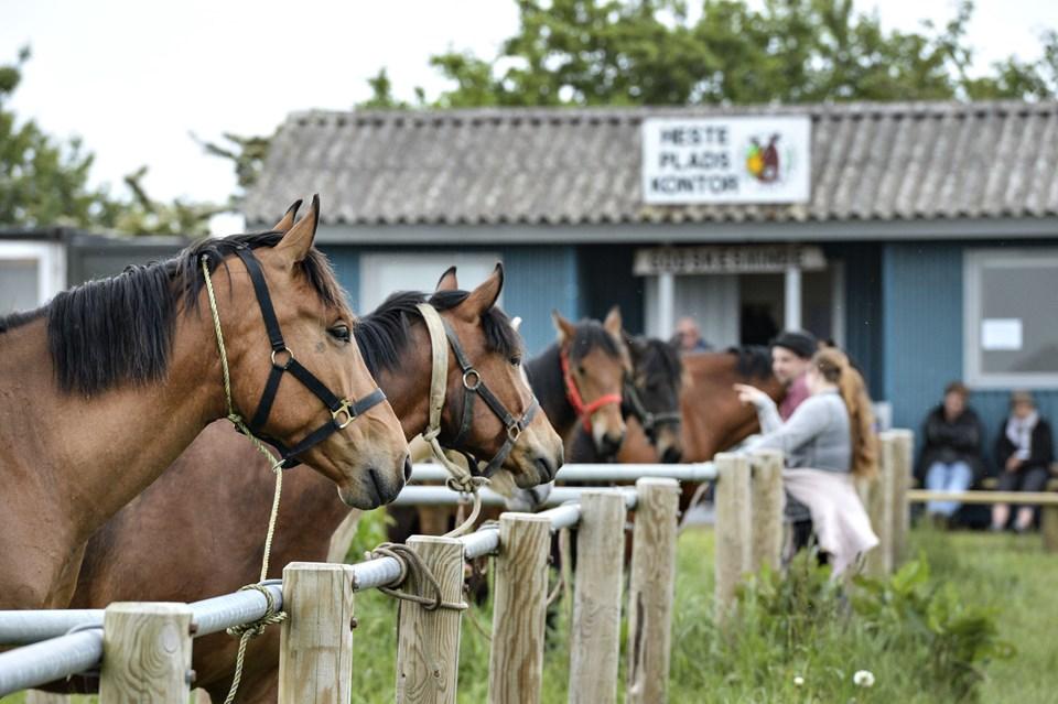 Der er også heste på markedspladsen. Foto: Bent Bach