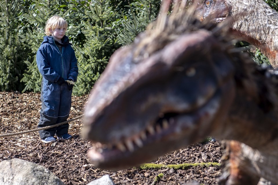 En af forklaringerne på det øgede besøgstal er dinosaurudstillingen. Arkivfoto: Andreas Falck