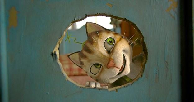 Katten Findus synes så godt om at have sit eget sted, at den beslutter at flytte ud af Peddersens hus. Foto: Hans Jørgen Callesen