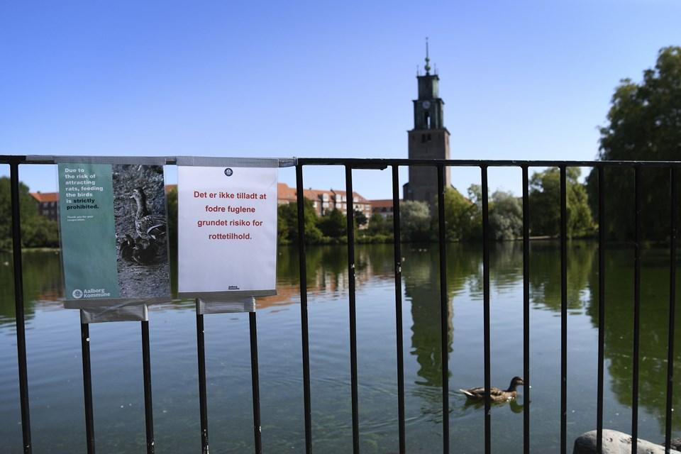 Aalborg Kommune henstiller i øjeblikket til brugerne af Østre Anlæg om at undlade at give fuglene mad. Fødekilden benytter rotterne sig nemlig i stor stil af.