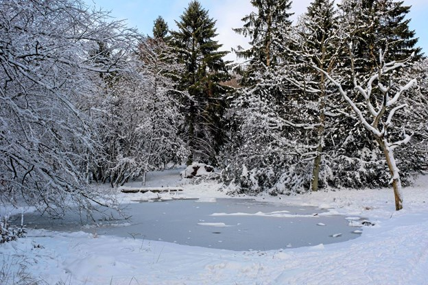 Den lille sø er tilfrosset. Sneen dækker skovbunden og træernes grene. Der er helt roligt. Foto: Niels Helver Niels Helver