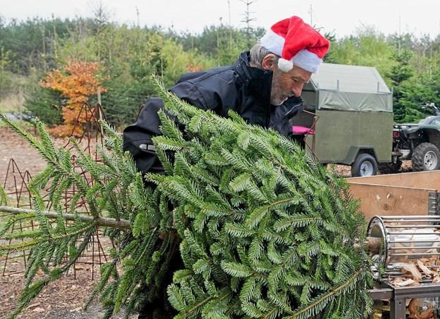 Ove Hansen har travlt med at tilspidse juletræerne. Foto: Niels Helver Niels Helver