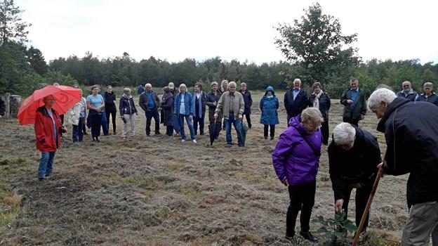 »Børn af Bratbjerg«, der er blandt de faste brugere af Huset ved Bratbjerg Søerne, havde udvalgt årets træ, som blev plantet ved mindestenene for Bratbjergmanden og ildsjælen Gunnar Nielsen. Foto: Tranum Aktieplantage