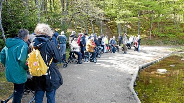 Naturvejleder Jakob Kofoed fortæller om Tverstedsøerne og om plantagens nyudsprungne bøgetræer. Foto: Niels Helver Niels Helver