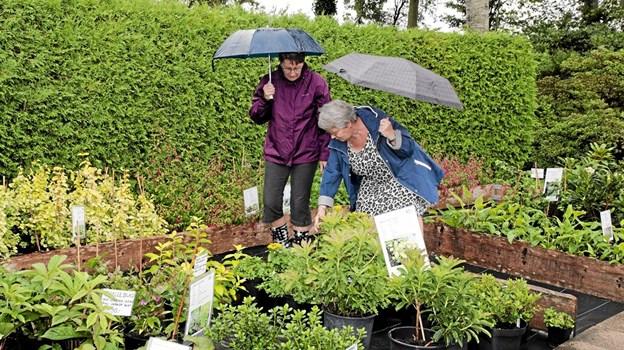 Regnen gjorde, at en paraply var påkrævet for, at de besøgende kunne nyde den smukke store have fuldt ud. Foto: Peter Jørgensen Peter Jørgensen